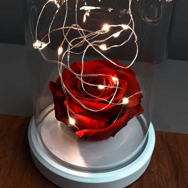 Kırmızı Solmayan Gül Işıklı Cam Fanus Lamba resmi
